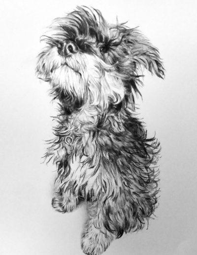 Albert, Schnauzer puppy