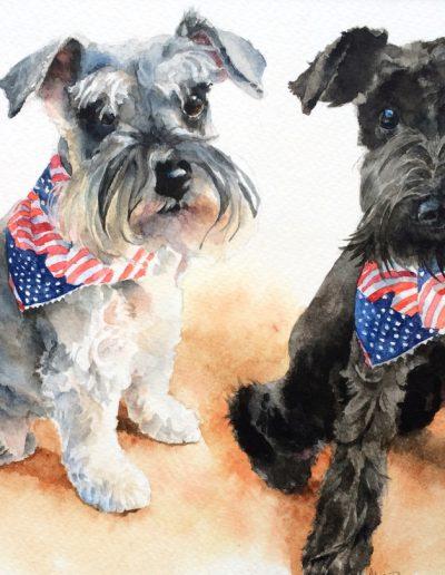 Daisy & Gatsby, American Schnauzers
