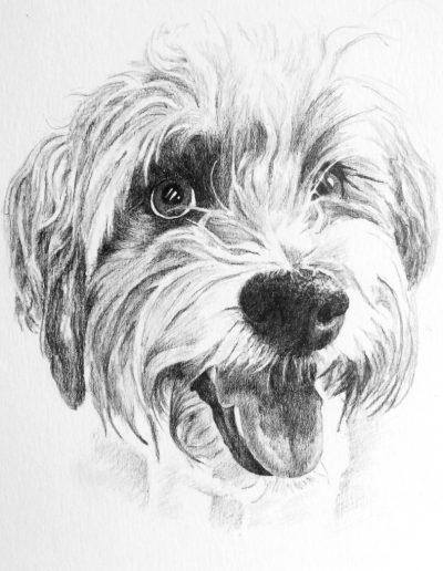 Lola, Tibetan terrier cross