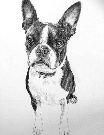 Oskar, Boston terrier